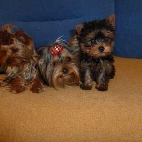 Элитные собачки, в Балаково