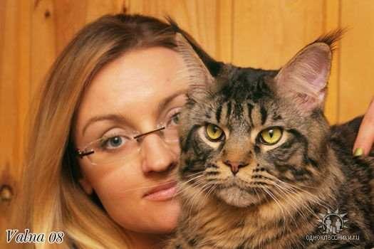 Продам котенка Мэйн Кун в Люберцы фото 9