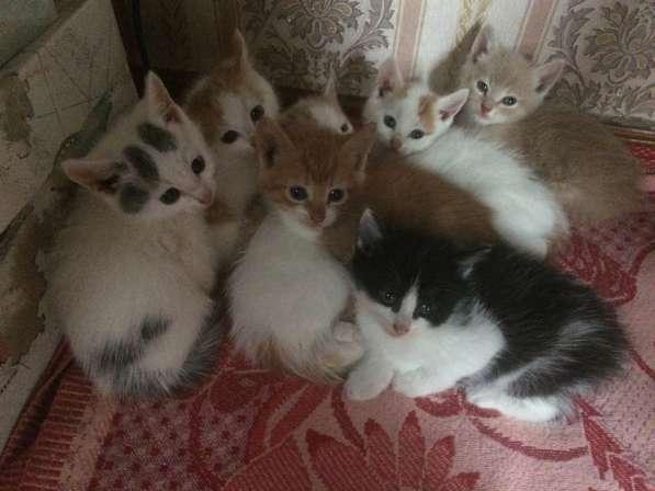 Кому котят? Даром!!!