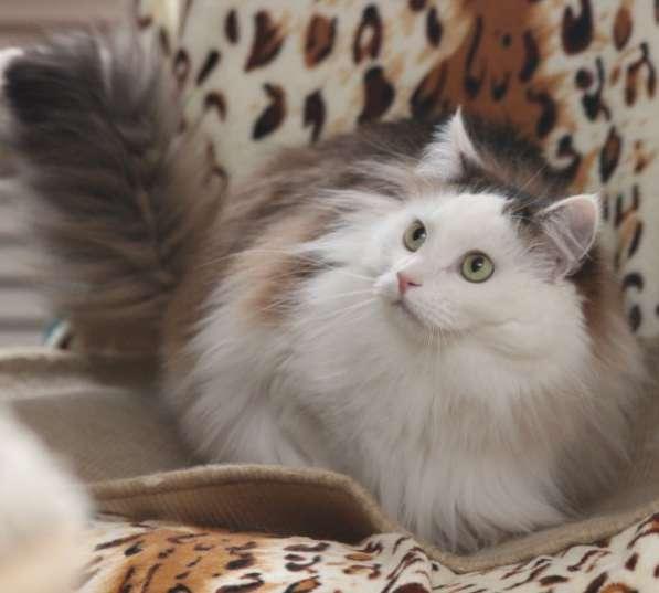 Котик Шапочка в добрые руки