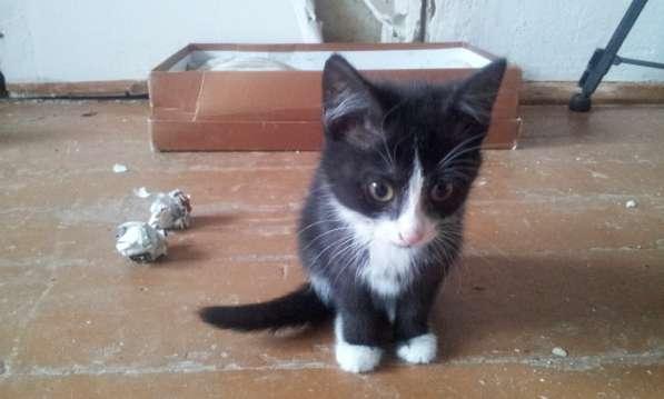 Котята в дар 2.5мес. девочки.+подарок