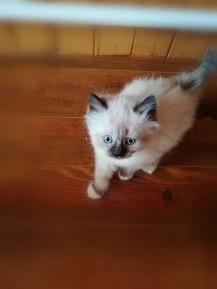 Подарю котят в фото 6