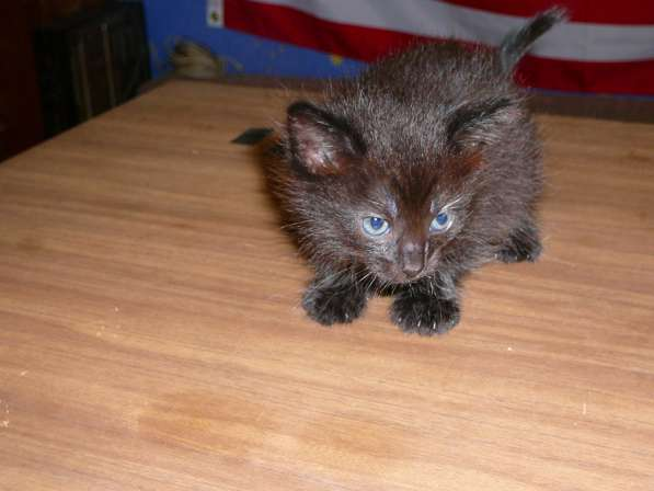 Отдам в хорошие руки котят, возраст 1 месяц 7 дней