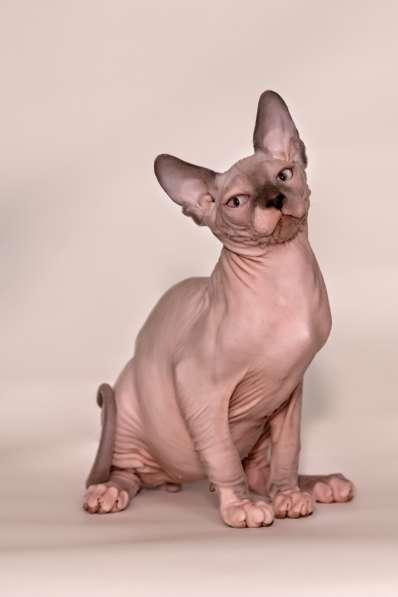 Эльф, бамбино, Cфинкс, это кошка с другой планеты