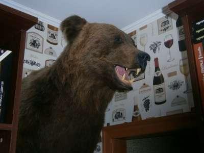 Чучело головы бурого медведя