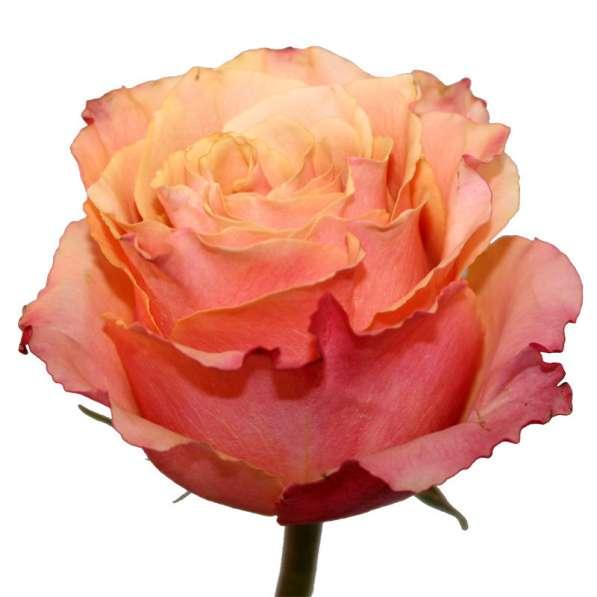Срез для букетов (розы) в Ростове-на-Дону фото 12