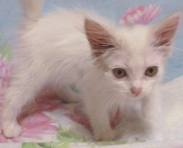 Кошка Мишель