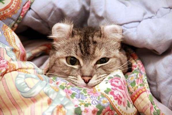 Одеяла синтепоновые от производителя. Иваново