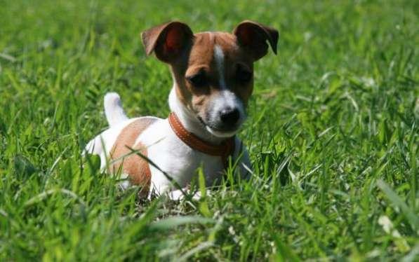 Передержка собак средних, крупных и мелких пород в Зеленограде