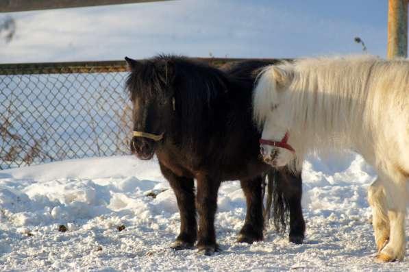 Пони и лошади на заказ