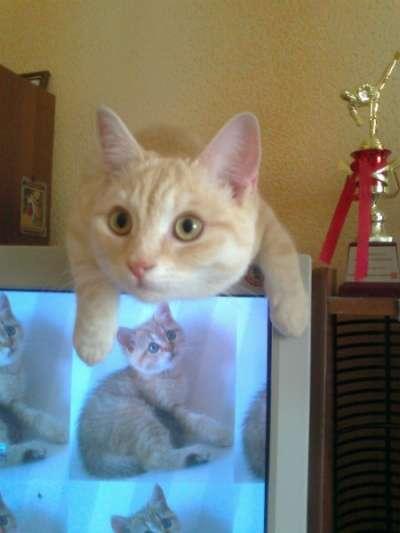 Отдам даром Домашнего доброго кота