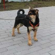 Хорошенькая смешная собачка, 5 месяцев, в г.Санкт-Петербург