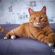 Ласковое солнышко Марсель, молодой домашний котик, в г.Москва