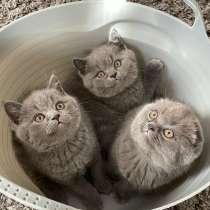 Продам котят 2 девочки, 1 мальчик, в г.Париж