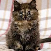 Инопланетянка Улька, домашний трехцветный котенок, в г.Москва