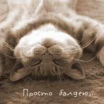 Отдам кота БЕСПЛАТНО (очень умный), в Иркутске
