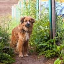 Пушистый красивый пёс небольшого размера, в г.Санкт-Петербург