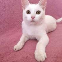Кошечка-подросток Снежинка, ласковая девочка в дар, в г.Москва