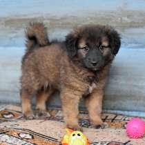 Очаровательные домашние щенки на любой вкус ищут дом, в г.Москва