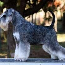 Стрижка собак. Витебск, Беларусь, в г.Витебск