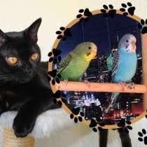 Волнистые попугаи -от Заводчика, в Москве