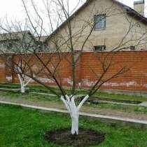 Услуги по обрезке садовых деревьев в Истре, в Истре
