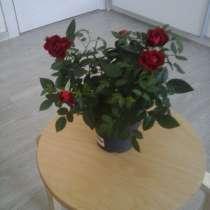 цветы для дома., в Москве