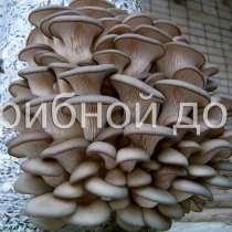 Мицелий грибов вешенка, шампиньонов, опенка, шиитаке, в Москве