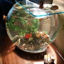 Аквариум с рыбками 21 штука гуппи-вуалехвост плюс мальки, в Санкт-Петербурге
