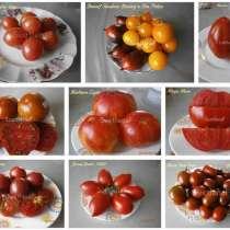 Семена томатов от Светланы (400 сортов), в Пятигорске