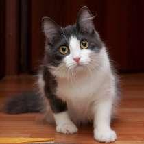 Котенок волшебной красоты, в г.Санкт-Петербург