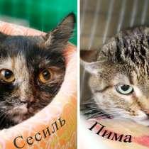 Приютские кошки со сложным характером, им сложно найти дом, в Москве