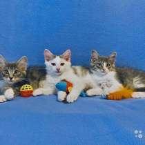 Домашние котята-малыши Кузя, Ника и Мика в дар, в г.Москва