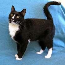 Красавец Том, молодой очень добрый котик в добрые руки, в г.Москва