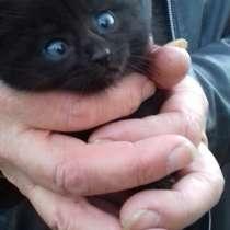 Отдаю двух маленьких котят в добрые руки!, в Москве