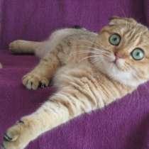 Ищу заботливые руки для золотой кошечки, в Казани