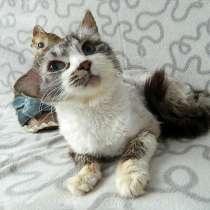 Нежный, очень ласковый котик Пух ищет дом и доброе сердце, в г.Москва