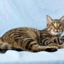 Отдам даром Маленький озорник Тишка милейший котенок, в г.Москва