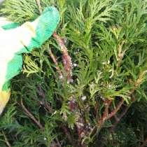 Уход за садом, участком, газоном, растениями, в Краснодаре