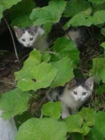 Отдам прекрасных котят (мальчики) в хорошие руки, в Ханты-Мансийске