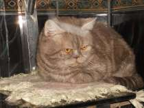 Вязка с плюшевым котиком, в Воронеже
