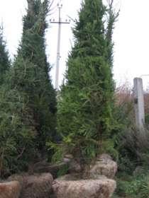 Крупномерные деревья, в Екатеринбурге