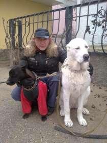 Индивидуальная дрессировка собак, в г.Феодосия