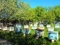 пчелопакеты, в Белгороде