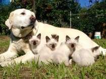 Если кошки то мекошки, в Нижнем Новгороде
