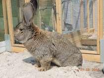 Нутрии и кролики, в Тюмени