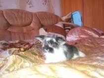 Декоративные вислоухие крольчата, в Березниках
