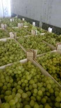 Виноград краснодарский, от 10 тонн Анапа, в Анапе