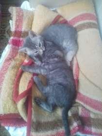 Котята, в Саратове