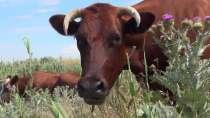 Действующее фермерское хозяйство в Крыму, в г.Керчь